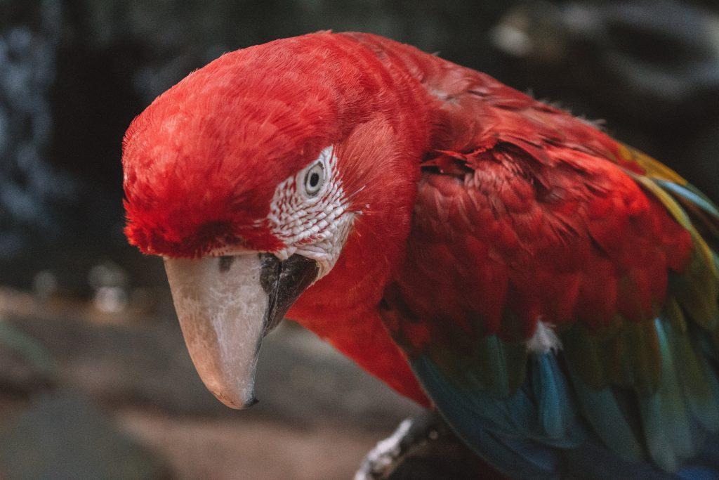 Iguazu Falls Parques das Aves