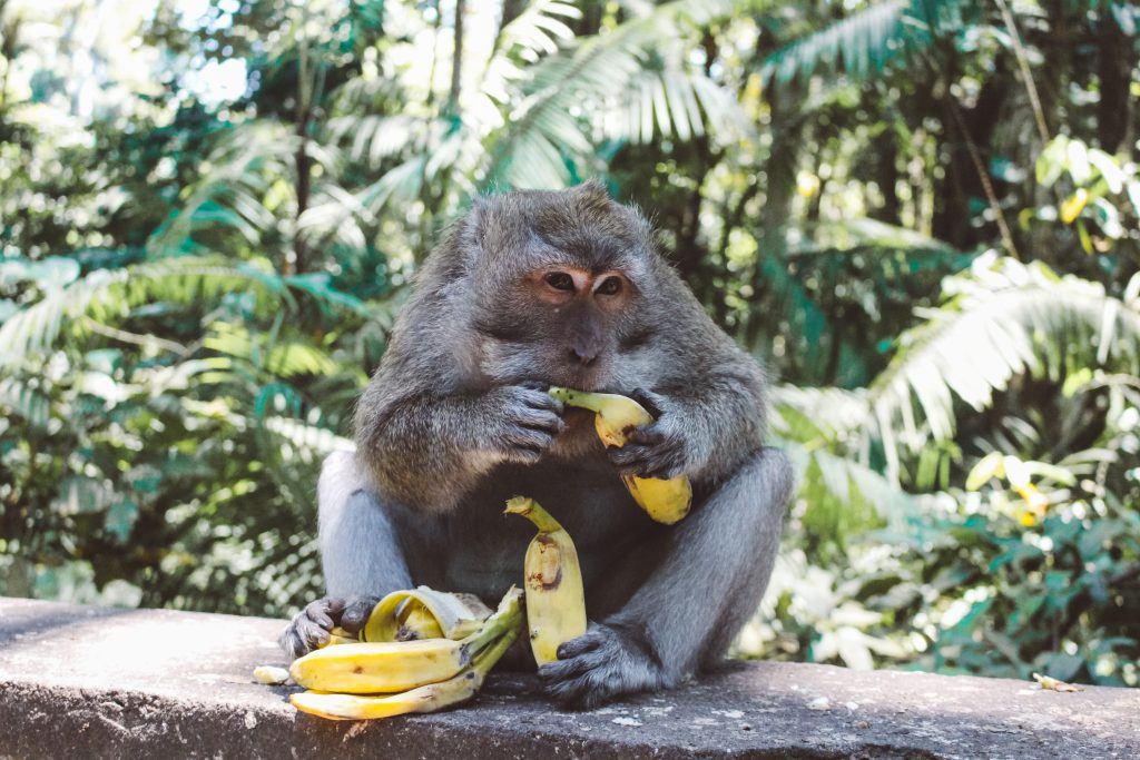 Ubud Bucket List: Monkey Forest